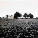 Cotton farm in Madison County, Alabama, 1922